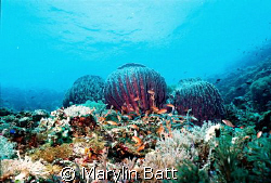 3 huge sponges top the reef the going off into the blue.